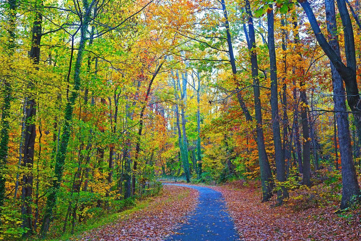 United States National Arboretum Washington Dc Ruebarue