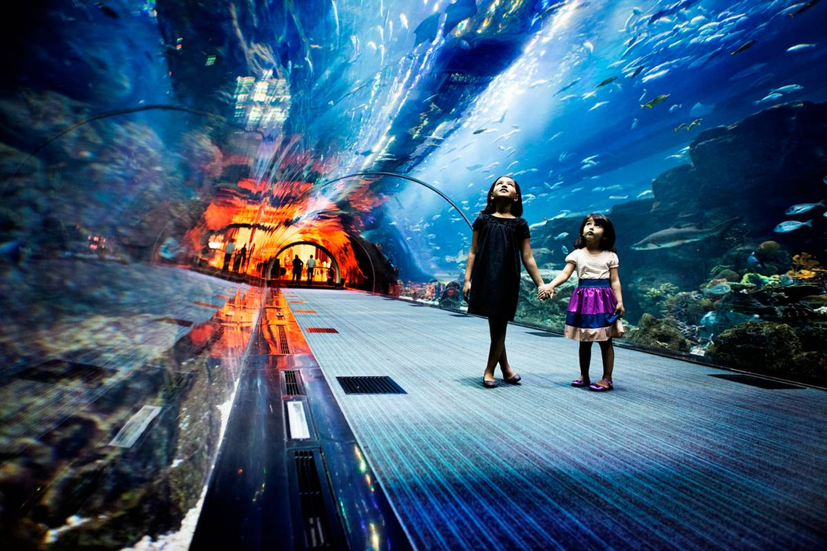 Dubai Aquarium  u0026 Underwater Zoo, Dubai   RueBaRue