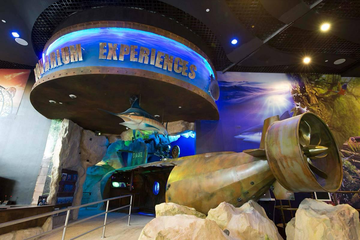 Dubai Aquarium Amp Underwater Zoo Dubai Ruebarue