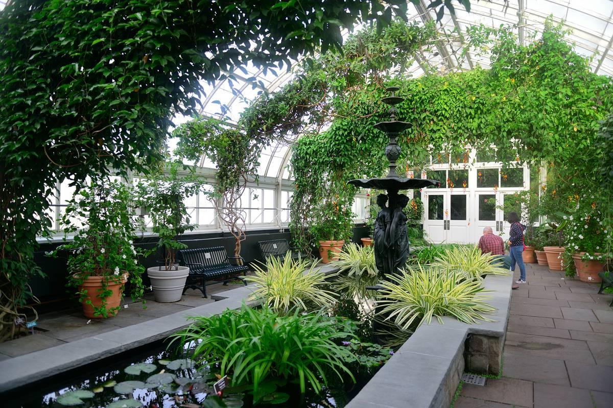 New York Botanical Garden New York City Ruebarue